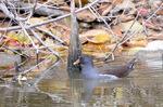 バン:西の池;クリックすると大きな写真になります