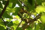 メジロ:松尾寺公園;クリックすると大きな写真になります。