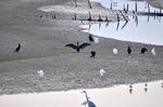群れる水鳥;クリックすると大きな写真になります