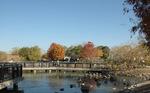 昆陽池野鳥観察橋:クリックすると大きな写真になります