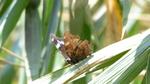 ルリタテハ:自然ふれあいの森;クリックすると大きな写真になります
