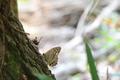 サトキマダラヒカゲ♀:堺自然ふるさとの森クリックすると大きな写真になります。