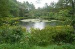 戸隠森林植物園;クリックすると大きな写真になります