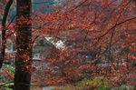 本堂近辺から福寿院をみる;クリックすると大きな写真になります