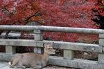 東大寺参道にて;クリックすると大きな写真になります