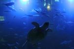 水中トンネル:海中公園;クリックすると大きな写真になります