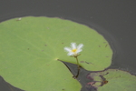 ガガブタ:荒池