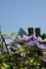 クレマチス:花の文化園;クリックすると大きな写真になります。