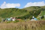 チカラシバの向こうに高丸:鉢伏高原;クリックすると大きな写真になります。
