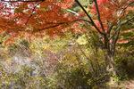 長谷池;クリックすると大きな写真になります。
