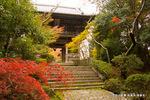 山門近くの紅葉:松尾寺;クリックすると大きな写真になります。