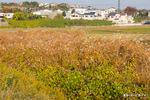 萱原:野々井;クリックすると大きな写真になります。