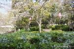 雪柳と桜:西原公園;クリックすると大きな写真になります。