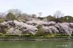 池越しの眺め;クリックすると大きな写真になります。