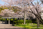 庭代台公園;クリックすると大きな写真になります。