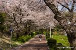 庭代台緑道;クリックすると大きな写真になります。