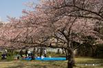 原山台公園;クリックすると大きな写真になります。