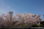 栂・美木多駅付近;クリックすると大きな写真になります。