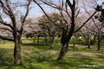 御池台公園;クリックすると大きな写真になります。.jpg