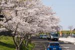堺市霊園;クリックすると大きな写真になります。
