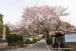 松尾寺参道;クリックすると大きな写真になります。
