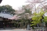 松尾寺三天堂あたり;クリックすると大きな写真になります。