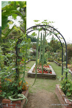 ヘビウリと花:花の文化園;クリックすると大きな写真になります。
