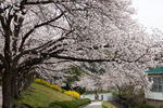 桃山台小学校裏門;クリックすると大きな写真になります。