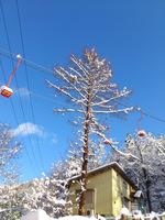 初冬の Hutte Hachi;クリックすると大きな写真になります