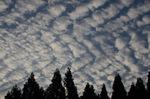 早朝のひつじ雲;クリックすると大きな写真になります