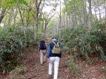 ブナ林の綺麗な登山道;クリックすると大きな写真になります