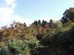 下山中に写した紅葉 ;クリックすると大きな写真になります