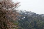 山桜の向こうに氷ノ山;クリックすると大きな写真になります