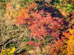 赤倉山の紅葉:クリックすると大きな写真になります