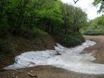 残雪と新緑:ハチ北スキー場;クリックすると大きな写真になります