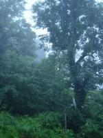 大雨の写真を撮ったはずだが:Hütte Hachi;クリックすると大きな写真になります。