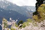 残雪の赤倉山;クリックすると大きな写真になります