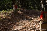 散策路の落ち葉:松尾寺;クリックすると大きな写真になります。