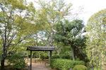 将軍塚庭園;クリックすると大きな写真になります