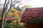 紅い落ち葉が茅葺きの屋根を染める:教林坊;クリックすると大きな写真になります