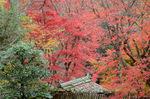 楓が萌える庭:教林坊;クリックすると大きな写真になります