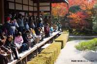 釈迦堂で紅葉を楽しむ人人;クリックすると大きな写真になります。