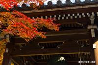 鐘楼そばの紅葉;クリックすると大きな写真になります。