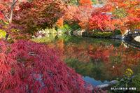 放生池:永観堂;クリックすると大きな写真になります。