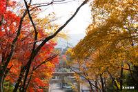 吉田山から真如堂の遠景;クリックすると大きな写真になります。