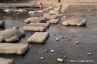 出町柳デルタにある飛び石;クリックすると大きな写真になります。