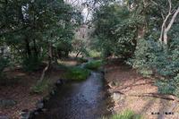 糺の森:下鴨神社;クリックすると大きな写真になります。