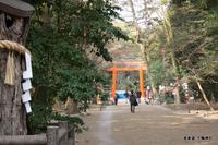 表参道:下鴨神社;クリックすると大きな写真になります。