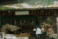 手水舎:下鴨神社;クリックすると大きな写真になります。