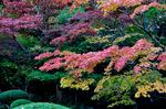 詩仙堂庭園;クリックすると大きな写真になります